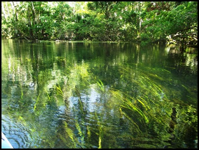 Wekiwa Springs State Park (77)A