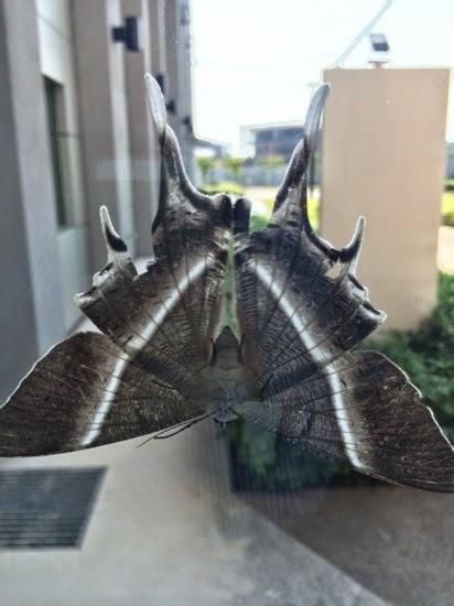 lots of moths in Johor