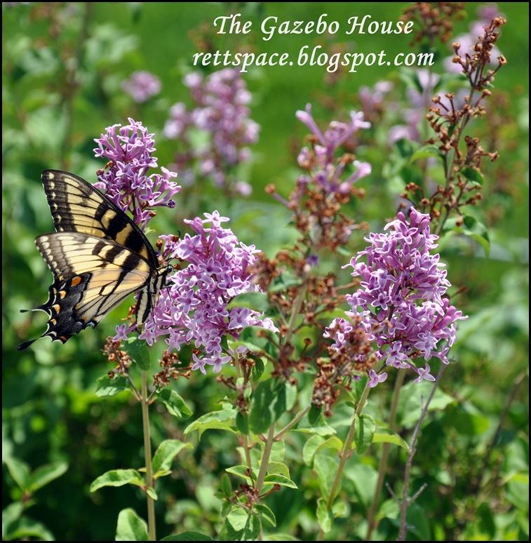 Liliacs & Butterflies 006