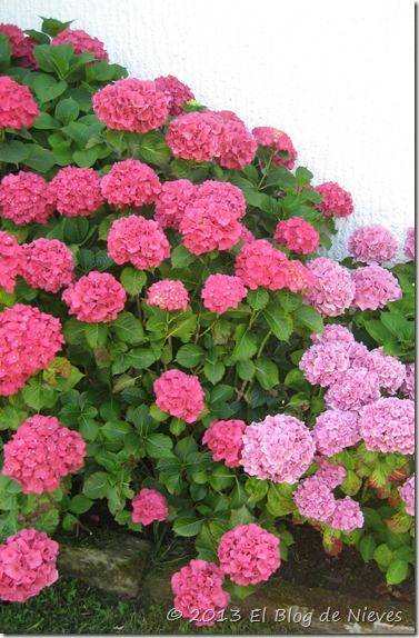 blog 88 flores 017