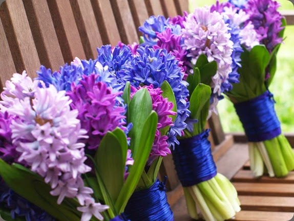 hyacinth 392545_10150815126386712_1722085539_n nine blooms au