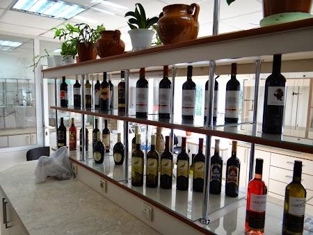 Drumul vinului -Basarabia: Vinurile Asconi