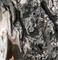 textura-corteza