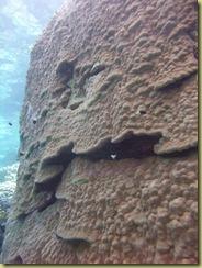 Coral Block-1