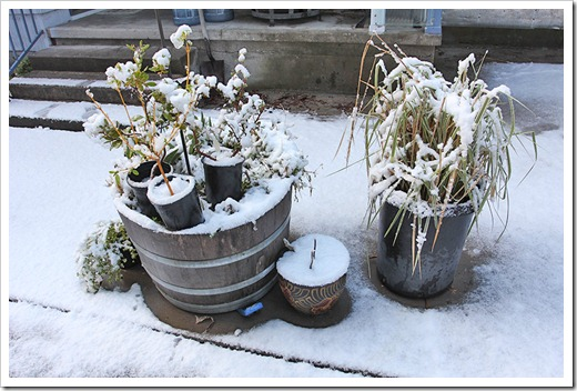 120412_plants_with_snow