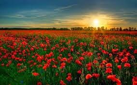 [Flowers%255B9%255D.jpg]