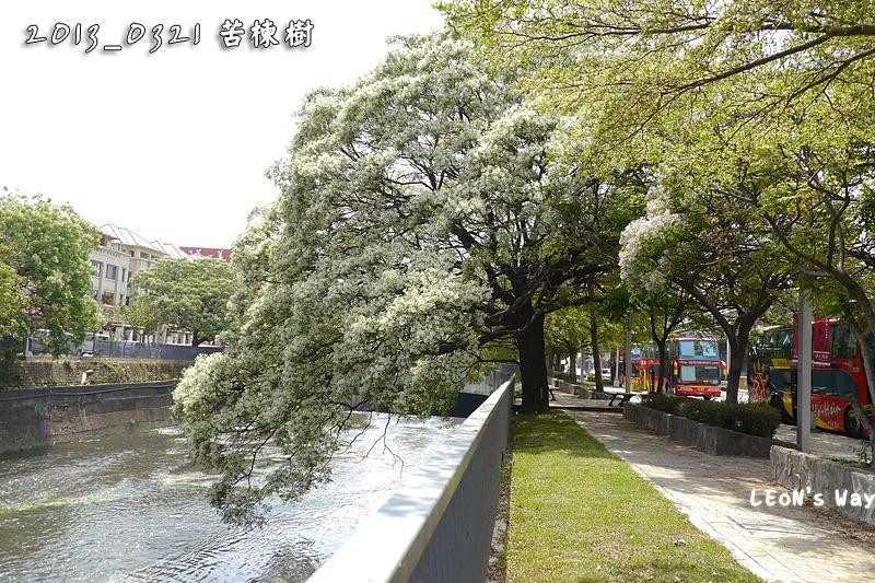 2013_0321-0322 苦楝樹_035