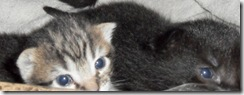 Little-tabby-girl- May-12-2013