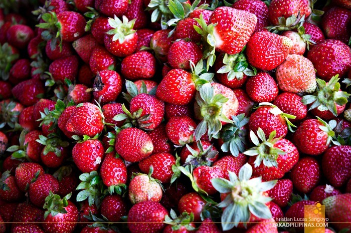 Fresh Strawberries at La Trinidad's Strawberry Farm