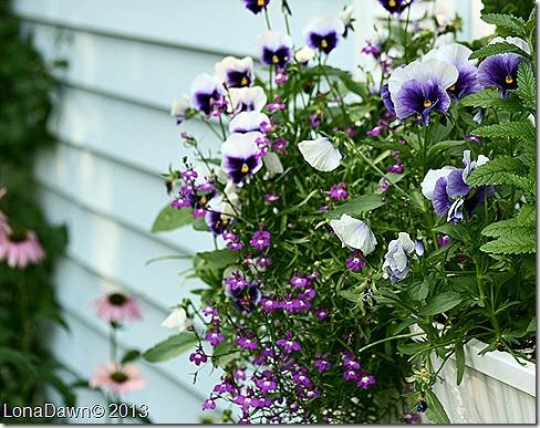 Windowbox_2009