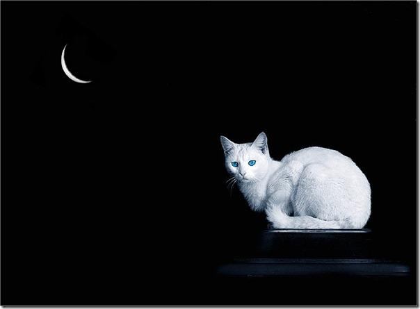felinos blogdeimagenes (6)