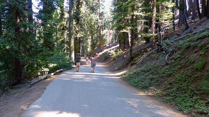 Tuolomne Grove of Giant Sequoias