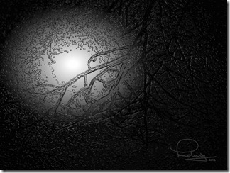 Streetlight in Fog