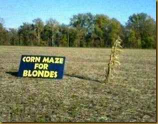 corn-maze-for-blondes2