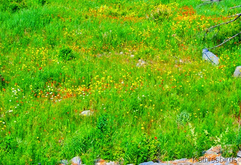8. field of flowers-kab