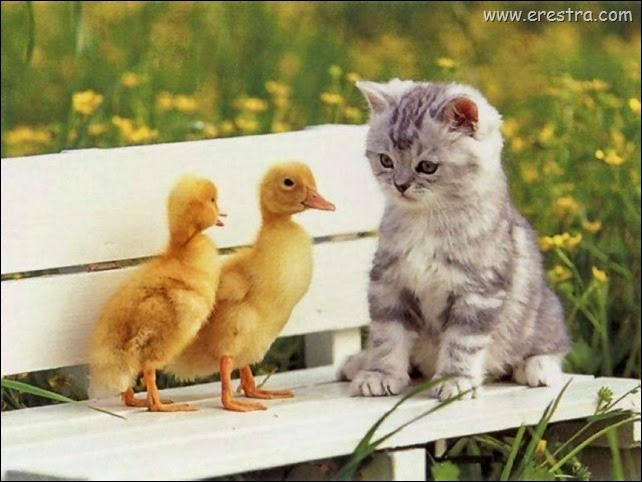 Chicks_and_Kitten_1024