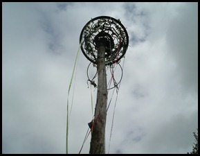 May Pole 2012