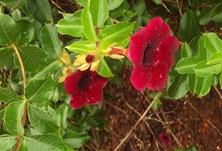 Natureza - flores [Rosemeire Rocha no Flickr]