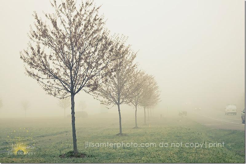 fog-5436