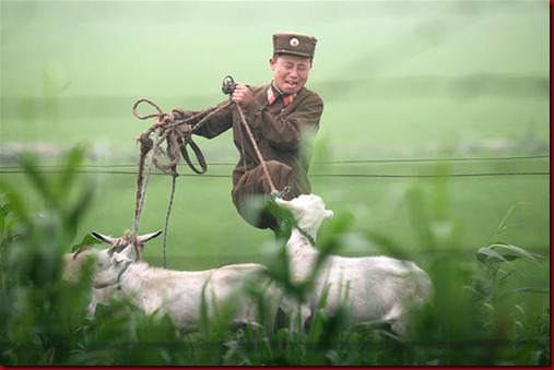 Tentara Korea Utara menendang seekor kambing