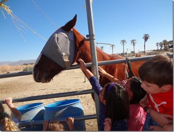Epona Horse 035