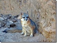 AZ Sanora Desert Museum 054