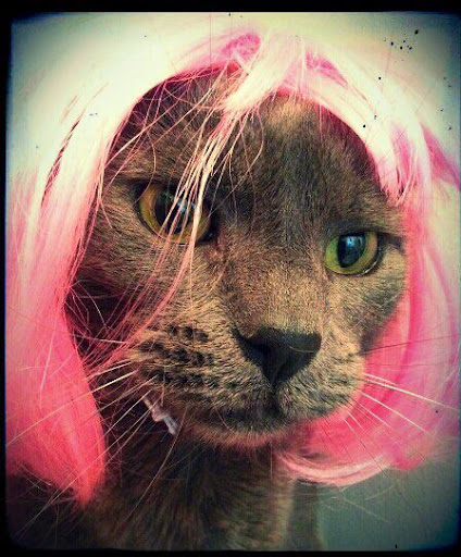 Purring and Pink!