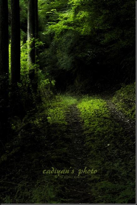 D700_2012-07-17_053_A