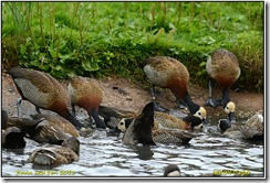 Slimbridge WWT - Rain