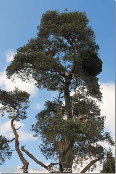 20-tree