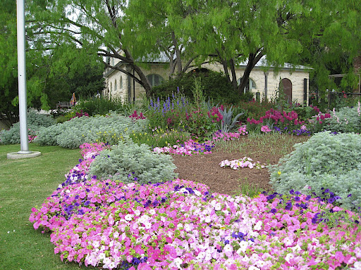 In Texas, they use petunias as spring annuals, which to us Northern gardeners seems surprising. Never in my life have I seen petunias look this pretty, though!