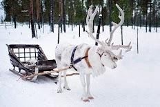 разходка с шейна теглена от елени