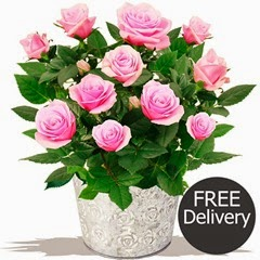 FREE DELIVERY Flowering Plants- Pink Rose Bush & Chocolates (Mothers Day Range)