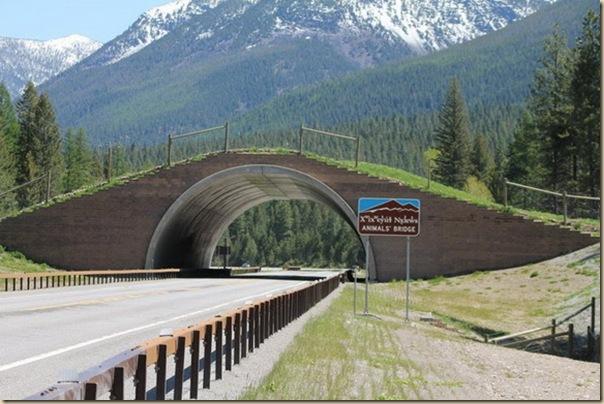 Ponts pour animaux - passages à faune (12)