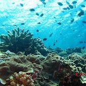 bunaken reef.jpg