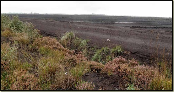 Little Woolden Moss - a peat bog