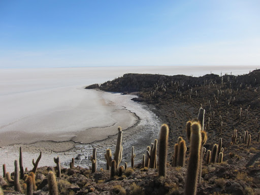 Isla Incahuasi, surrounded by the Uyuni Salt Flats.