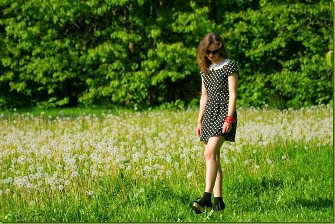 wildflower meadow in spring