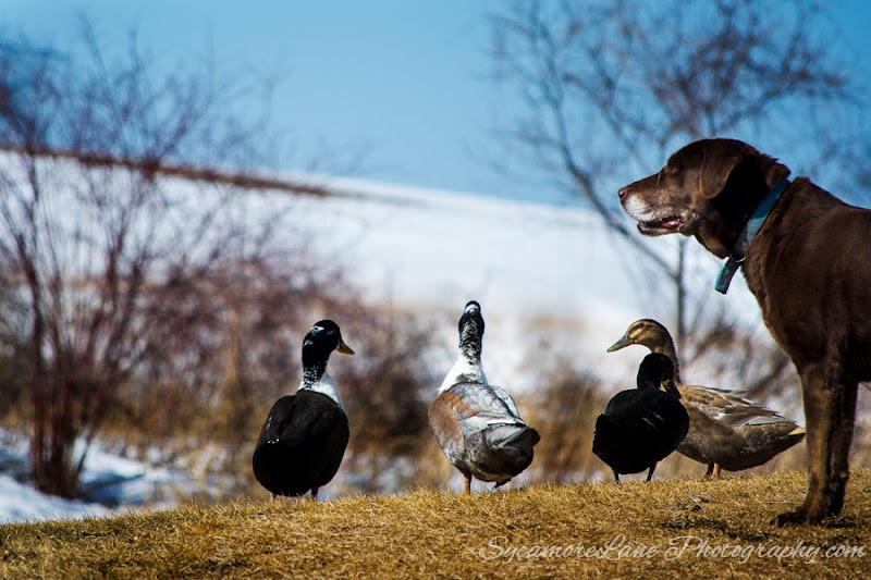 SycamoreLane Photography- 2015- 365- day 76