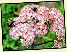 25i4 - Anna Ruby Falls - Trees and Flowers - The Bees Favorite