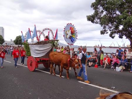 24. Vaca din Azore.JPG