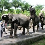 Бали. Сафари на слонах 2.jpg