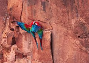 Amazing Pictures of Animals, Photo, Nature, Incredibel, Funny, Zoo, Red-and-green Macaw, ara chloropterus, Bird,  Alex.  (7)