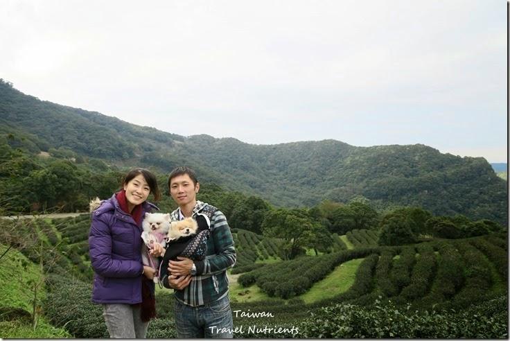 三峽熊空茶園 (39)