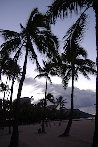 Palm trees on the beach at sunrise.