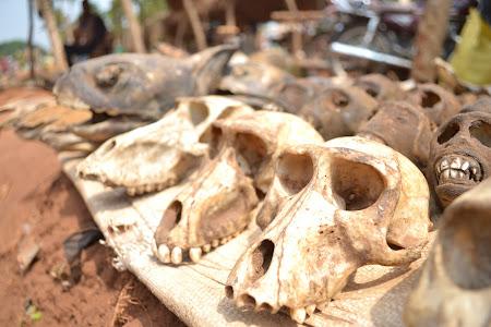Voluntar in Africa: fetisuri in tara voodoo - Togo