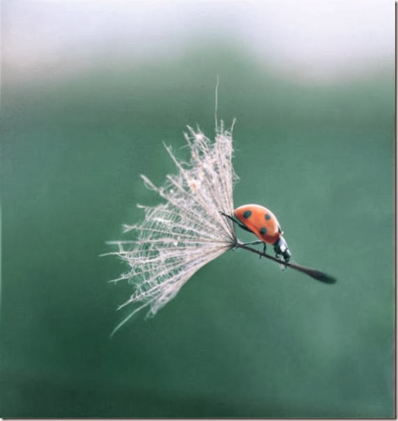 perfect-timing-photos-022