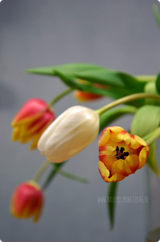 Fuchsige Tulpen (03) am FridayFlowerday