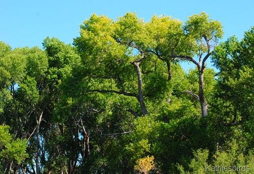 6. tall trees-kab