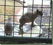 Paignton Zoo 8